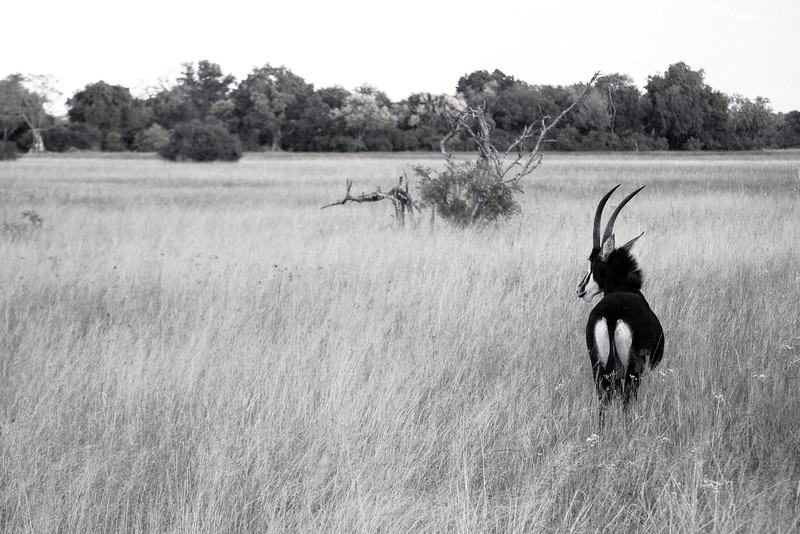 Botswana0660