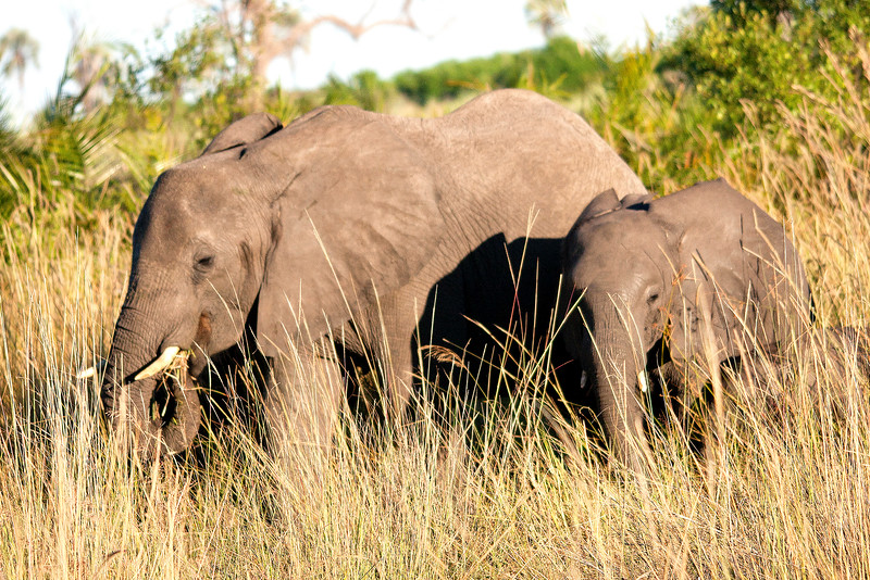 Botswana0303