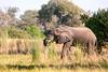 Botswana0598