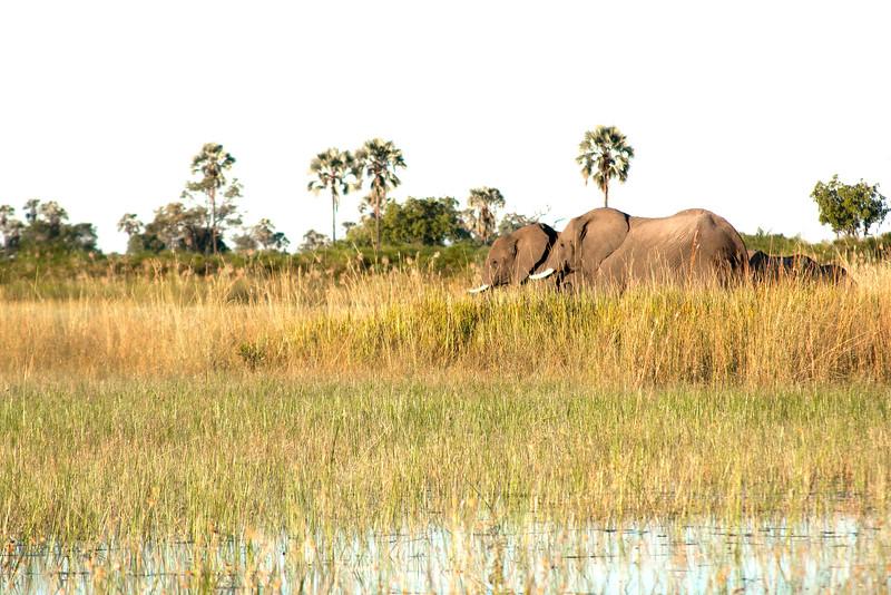 Botswana0414