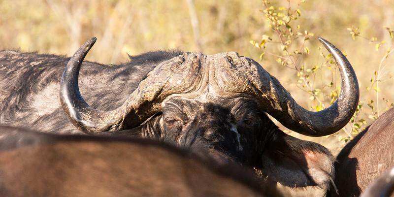 Botswana0233