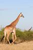 Botswana0088