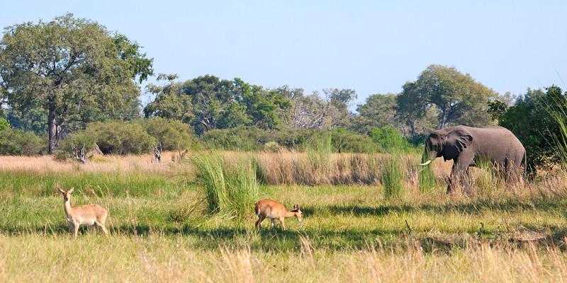 Botswana0595