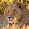 Botswana0146 (1)