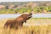 Botswana0886