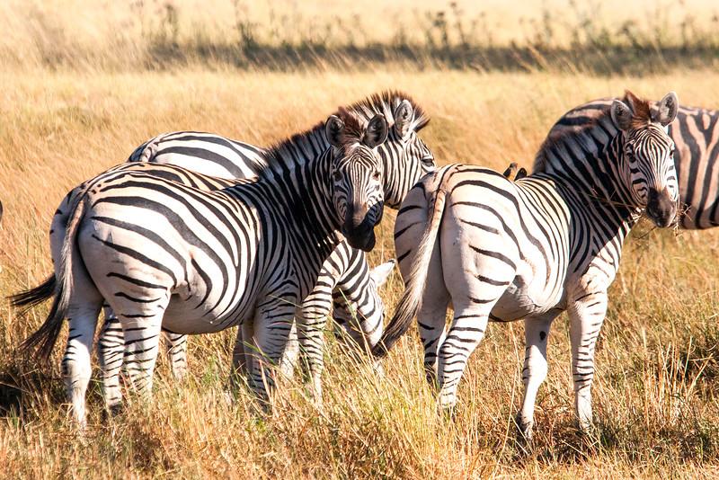 Botswana0586