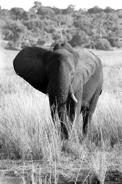 Botswana0833 BW