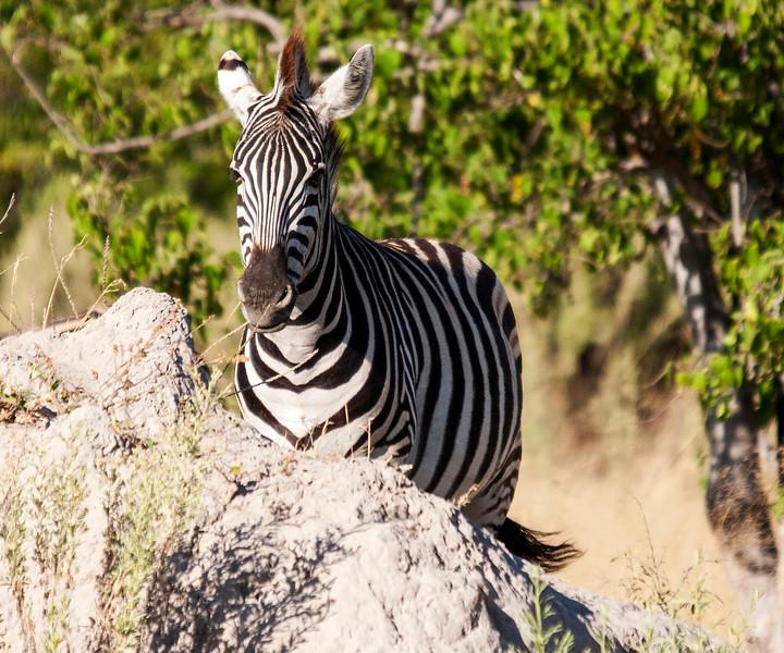 Botswana0572