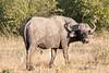 Botswana0095