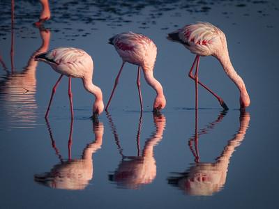 Flamingos near Walvis Bay, Namibia.