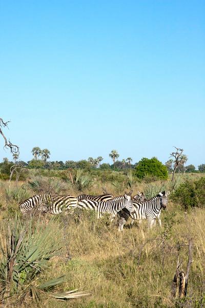 Botswana0363