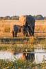 Botswana0185