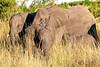Botswana03071