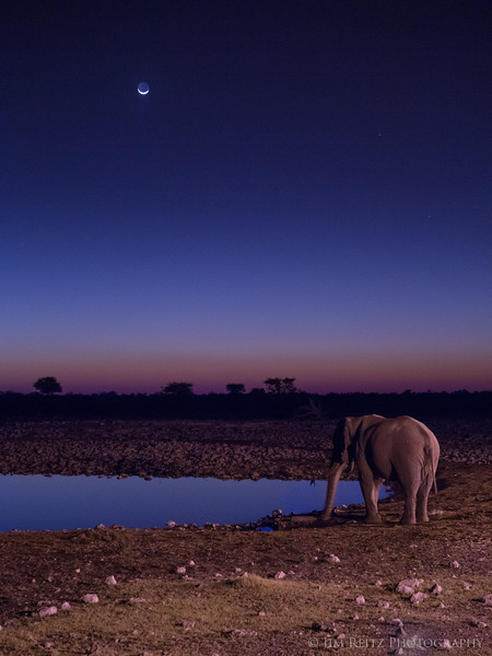 Moon and Elephant