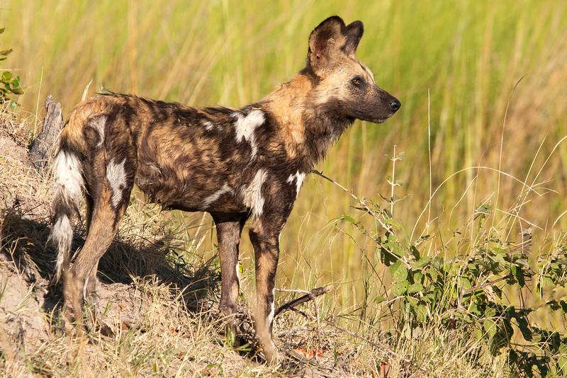 Botswana0644