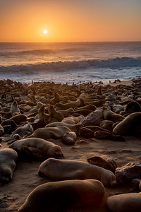 Seal colony at sunset. Cape Cross, Namibia.