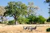 Botswana0592
