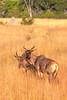 Botswana0546
