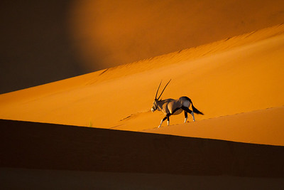 Oryx in Namib-Naukluft National Park, Namibia.