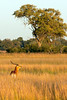 Botswana0522