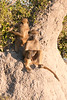 Botswana0205