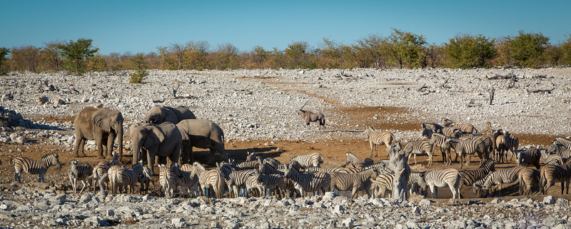 Another very busy water hole during the dry season - Etosha National Park, Namibia.