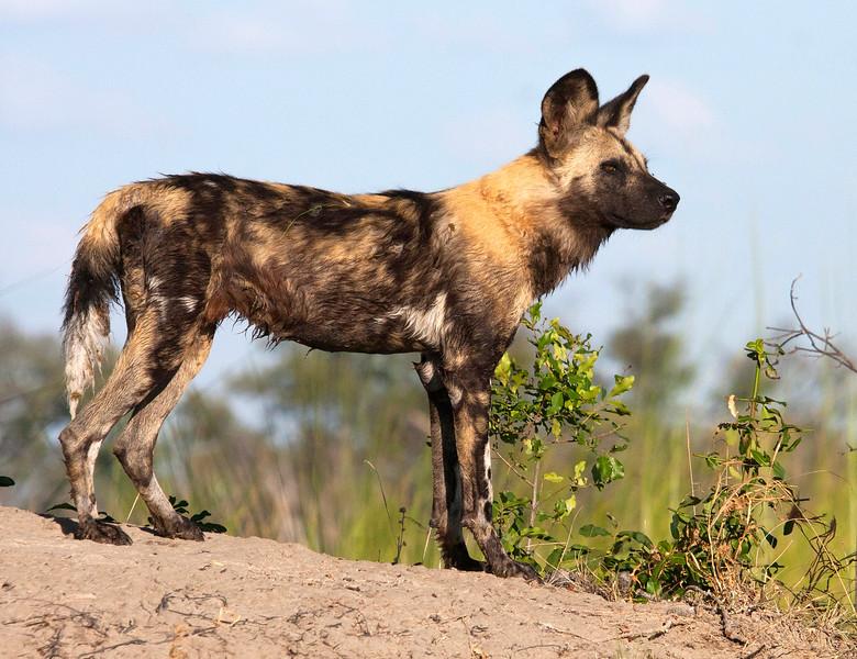 Botswana06481