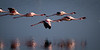 Flamingos near Walvis Bay, Namibia.