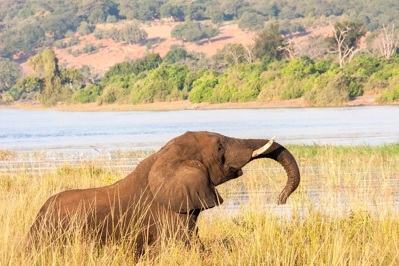 Botswana0885