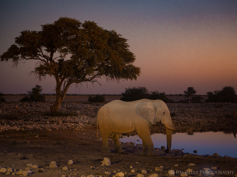 Elephant - Etosha National Park, Namibia. This main water hole at Okuakuejo Camp has floodlights to allow animal-viewing at night.