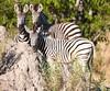 Botswana0564