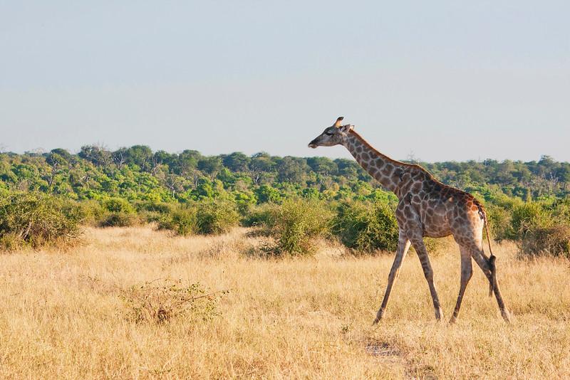 Botswana0082