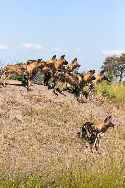 Botswana0634