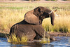 Botswana0854
