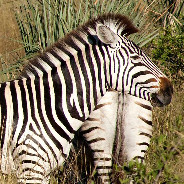 Botswana0354
