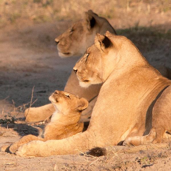 Botswana0164 (1)