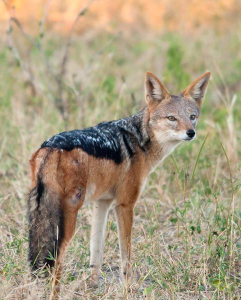 Botswana0196