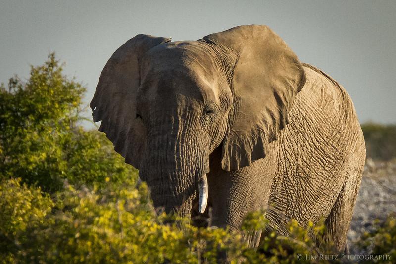 Approaching elephant - Etosha National Park, Namibia.