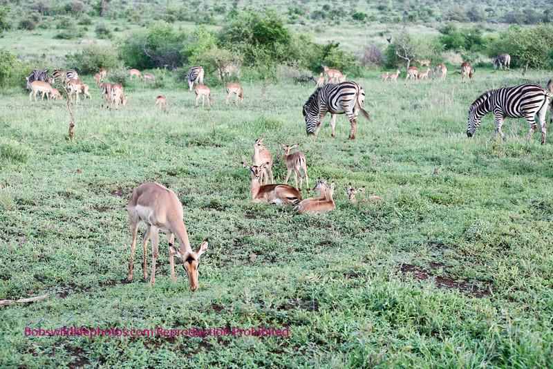 Beautiful isn't it? Kruger Park