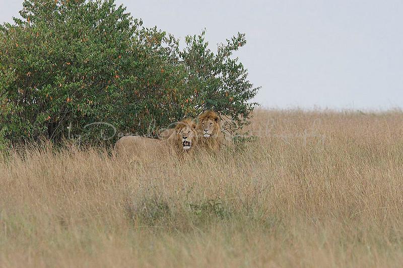 2007 07 24 Masai Mara 397