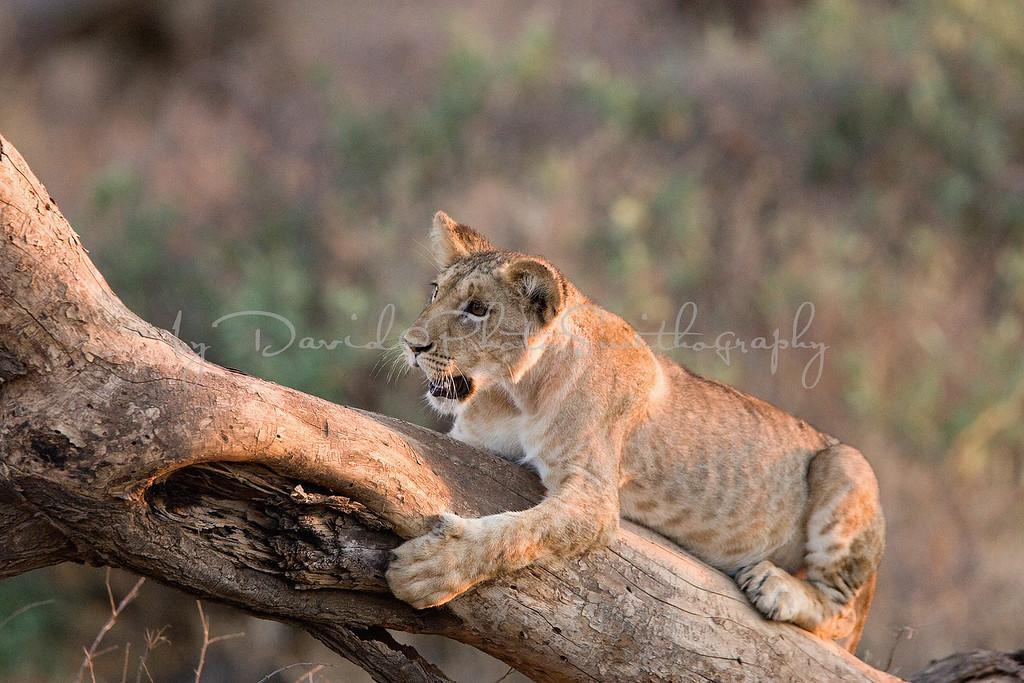 20100903_Samburu_065