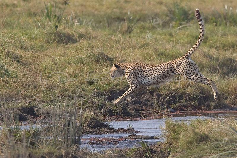 2007 07 17 Ngorongoro  089