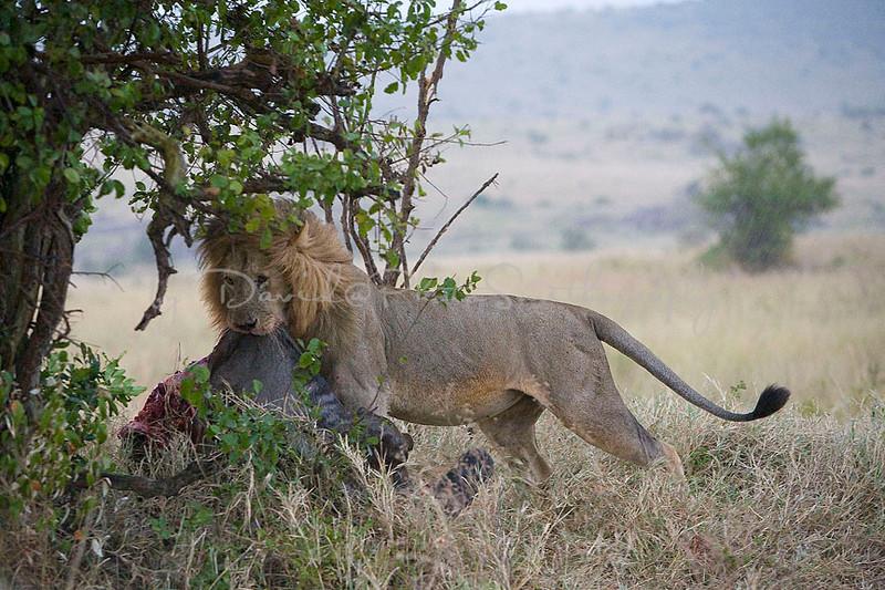 2007 07 23 Masai Mara 121