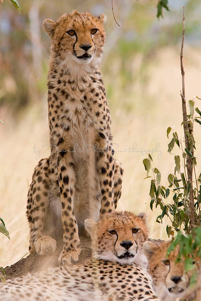2007 07 25 Masai Mara 499