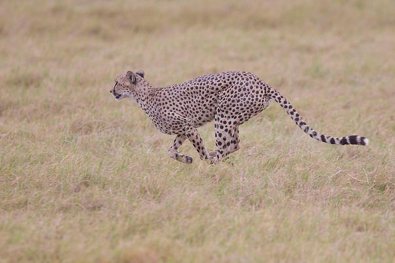2007 07 19 Amboseli 176