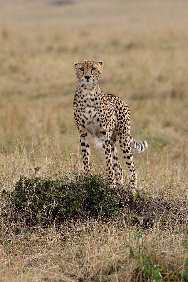 20100911_Maasi Mara_658