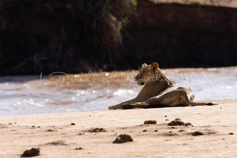 20100905_Samburu_107
