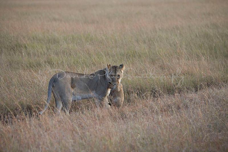 2007 07 24 Masai Mara 181