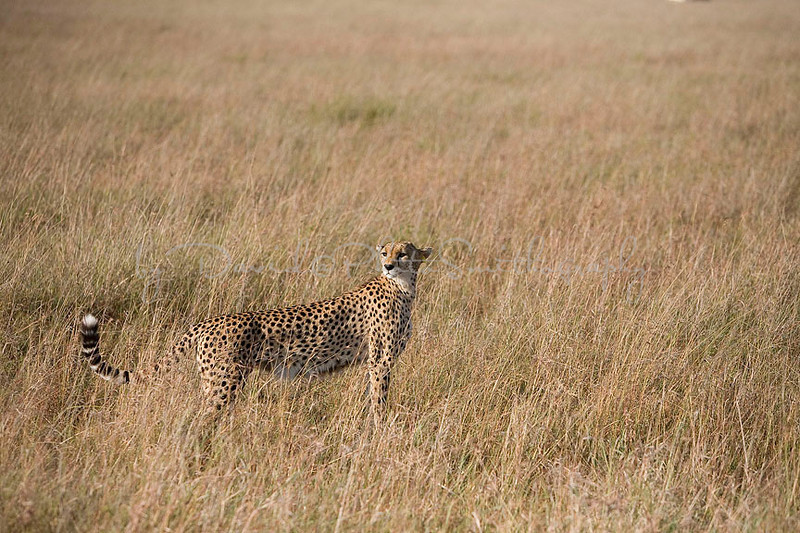 2007 07 24 Masai Mara 229