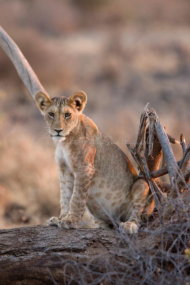 20100903_Samburu_049